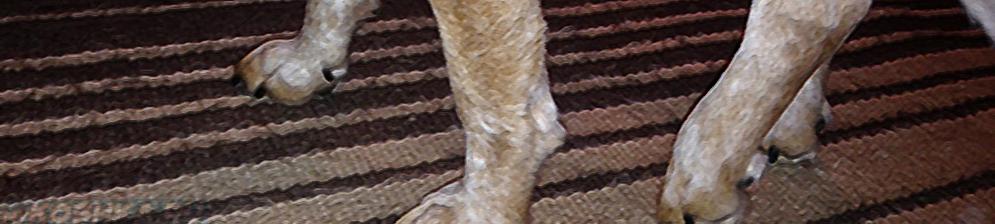 Задняя лапа хромает у собаки