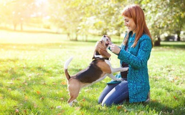 Собака и человек на природе