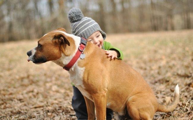 Собака в ошейнике и ребёнок