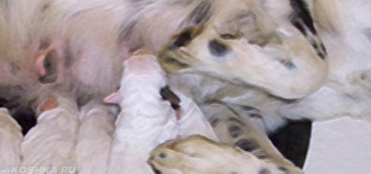 Собака и её щенки после родов