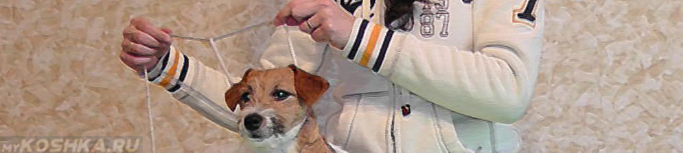 Одевание ринговки на собаку