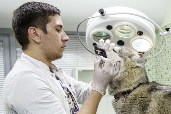 Лечение зубов собаке в ветеринарной клинике