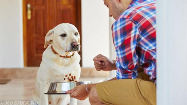 Собака и хозяин с миской сухого корма в руке