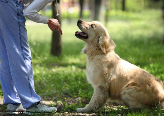 Тренировка собаки в парке