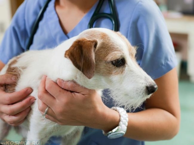 Собака в ветеринарной клинике