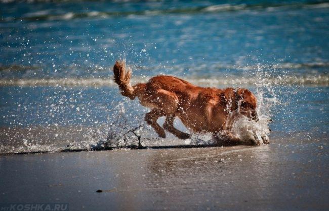 Собака играющая на берегу