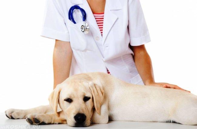 Собака у ветеринара на столе