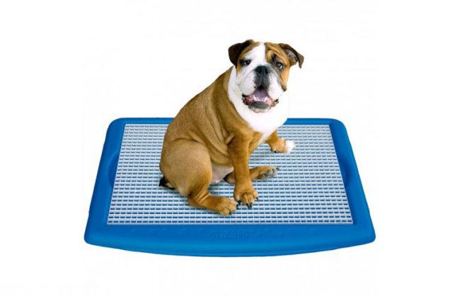 Собака сидящая в лотке синего цвета