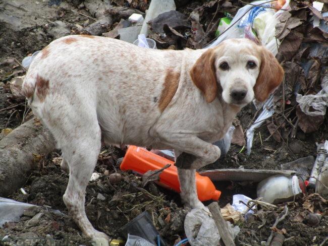 Собака с поднятой лапой стоящая в мусоре