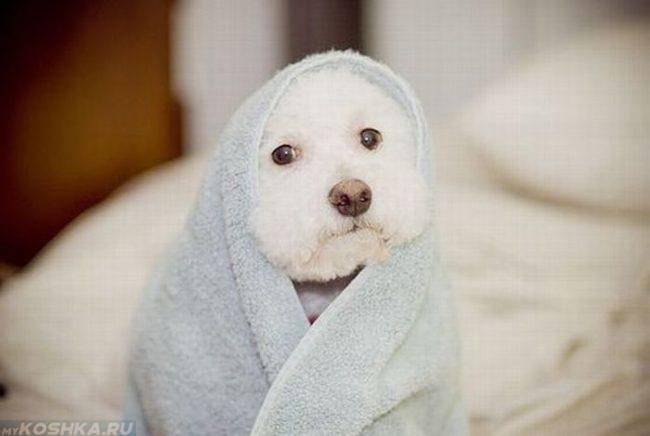 Собака завёрнутая в полотенце