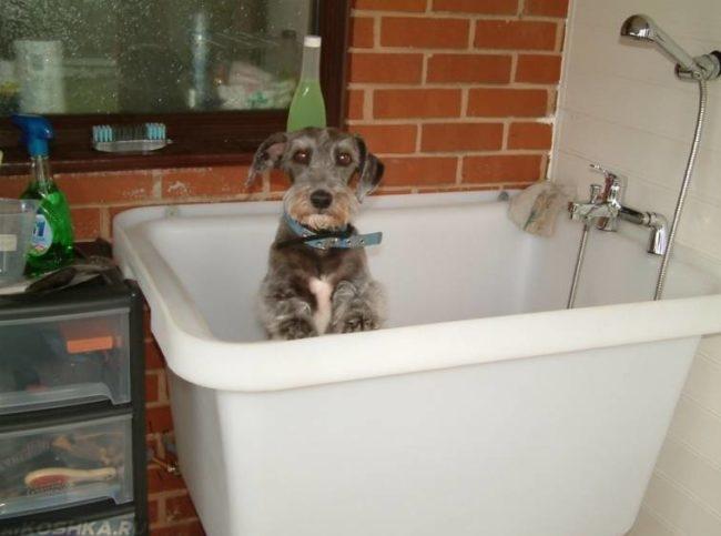 Собака с ошейником сидящая в ванне
