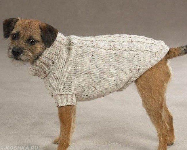 Собака в вязанной жилетке