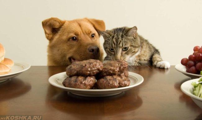 Котлеты в тарелке на столе и собака с кошкой