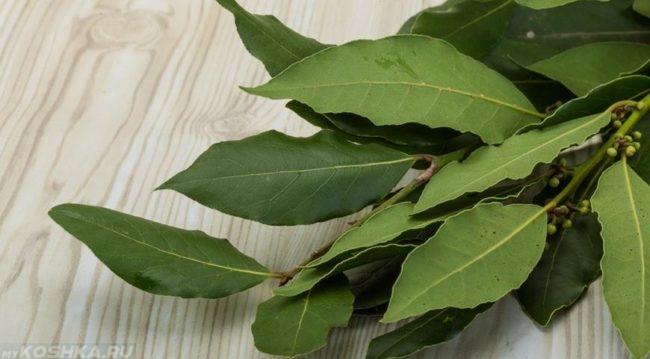 Зелёный лавровый лист на столе