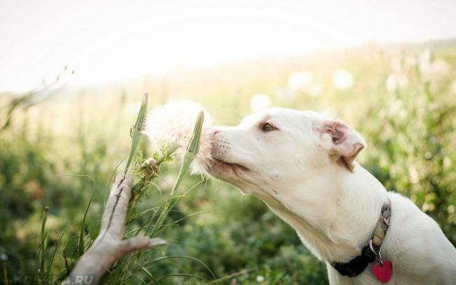 Собака нюхающая цветы в поле