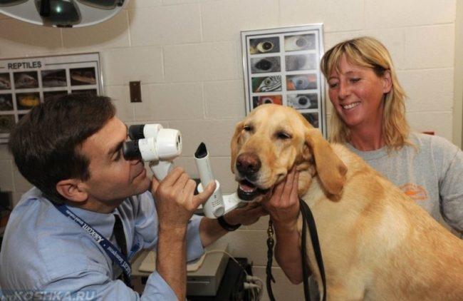 Собака на приёме у ветеринара