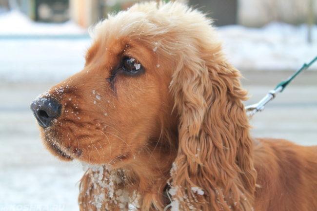 Собака зимой на улице на поводке