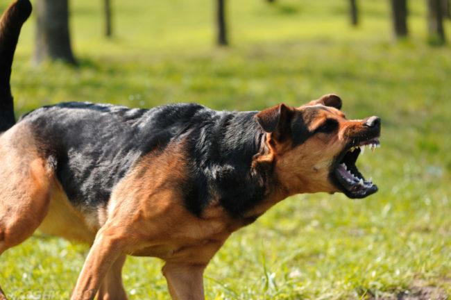 Агрессивная собака на улице