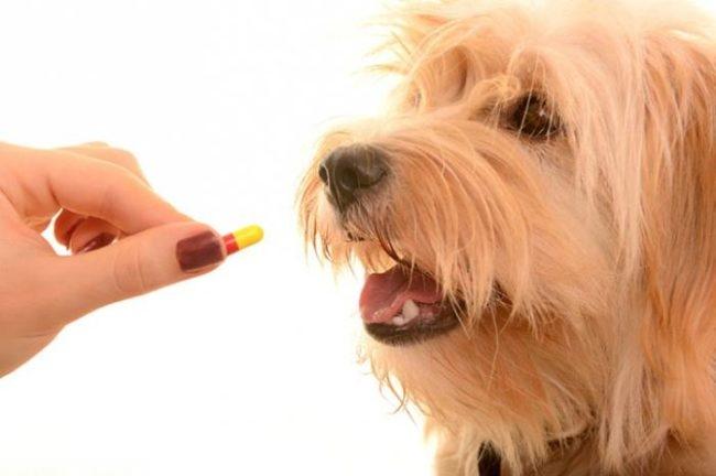 Антибиотик в руке и собака
