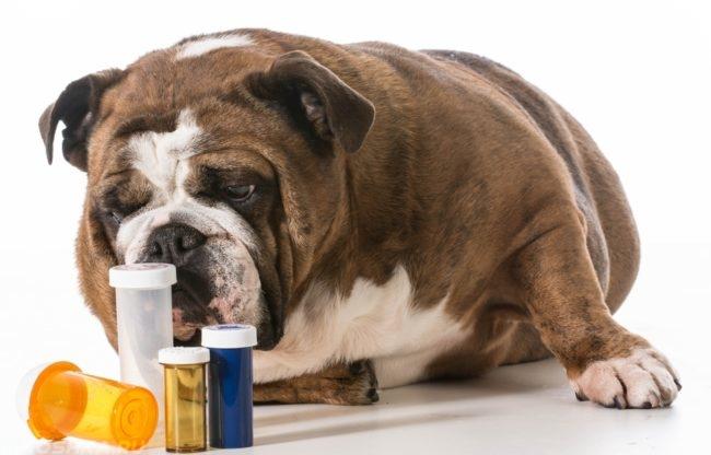 Собака и баночки от антибиотиков
