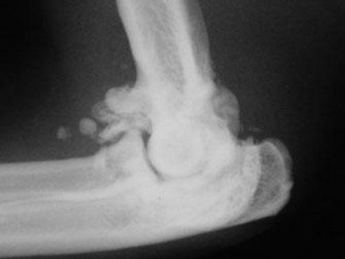 Артроз колена у собаки на снимке