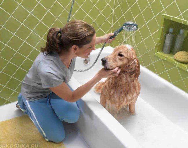 Собака под душем в ванной