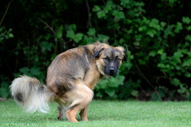 Диарея у собаки на зелёной поляне