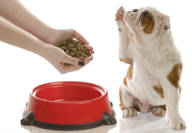 Корм в руках над красной миской и собака