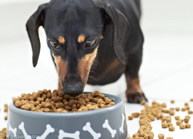Собака и сухой корм в миске