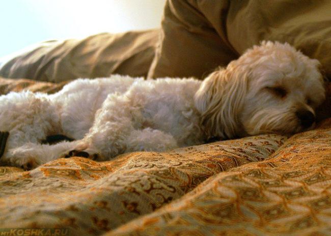 Гастроэнтерит у собаки лежащей на диване