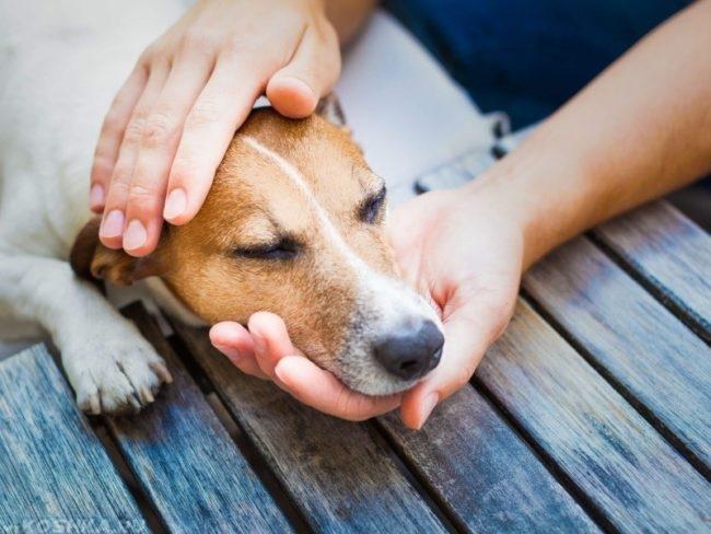 Головокружение у собаки коричневого окраса