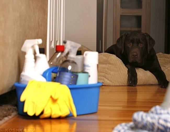 Бытовая химия и собака на лежанке