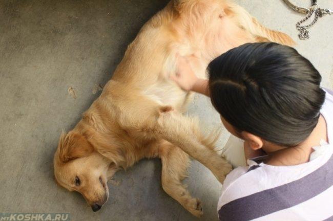 Интоксикация у собаки лежащей на полу