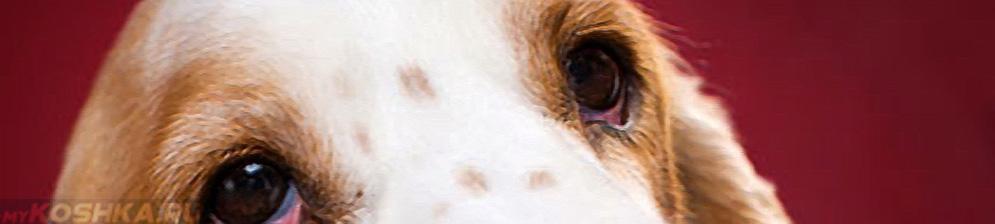 Красные глаза у собаки вблизи