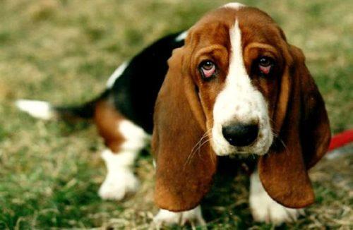 Красные глаза у собаки сидящей на траве