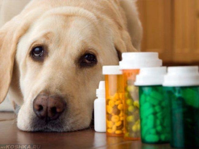 Собака и таблетки в баночках