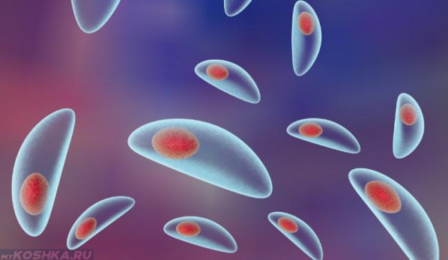 Микроорганизм возбудитель токсоплазмоза