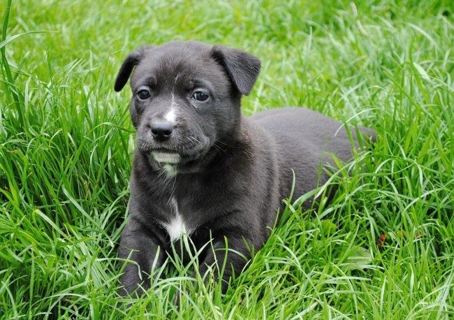 Молодая собака на зелёной траве