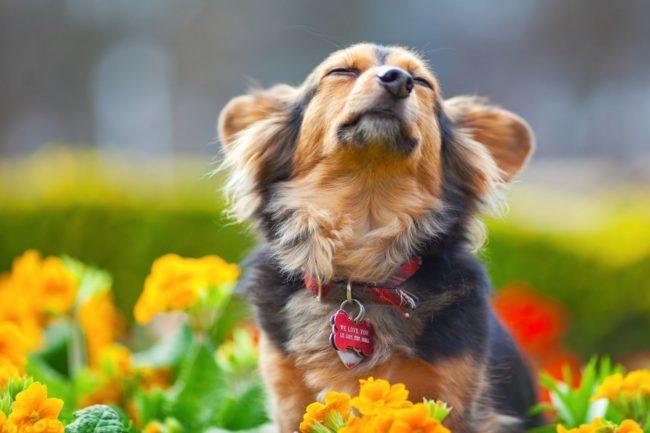 Собака в ошейнике поднявшая голову вверх