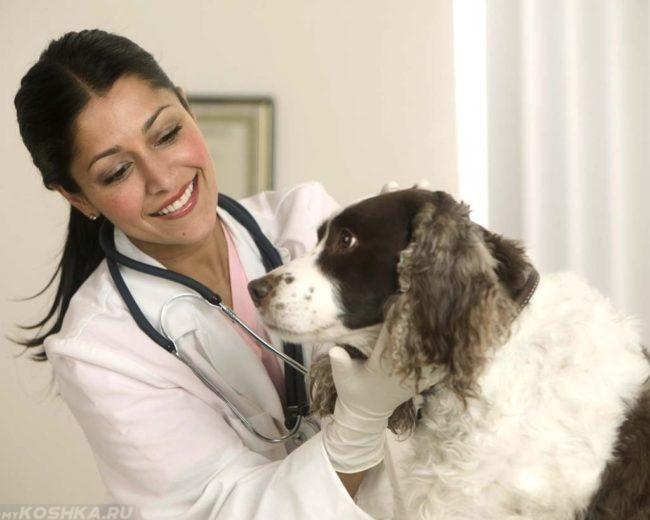 Осмотр собаки в ветеринарной клинике