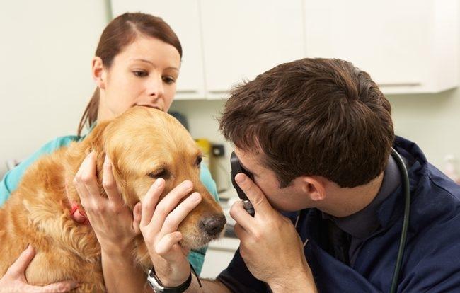 Осмотр глаз у собаки в клинике