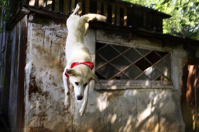 Собака падающая вниз с крыши