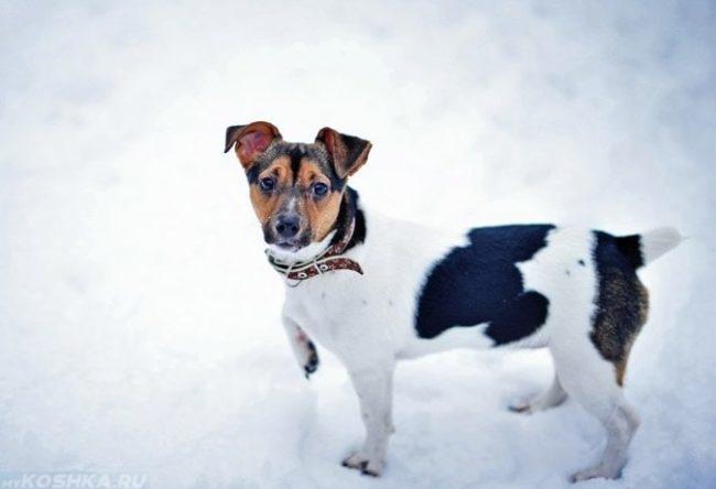 Собака на снегу зимой в ошейнике