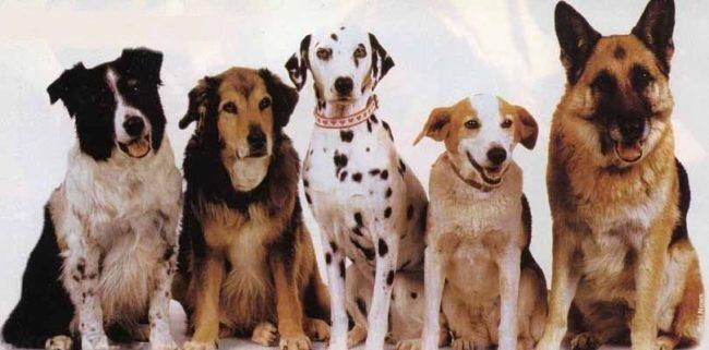 Собаки разных пород сидящие в ряд