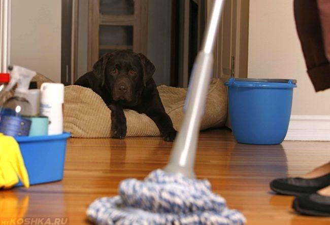 Мытьё полов шваброй и собака на пуфике