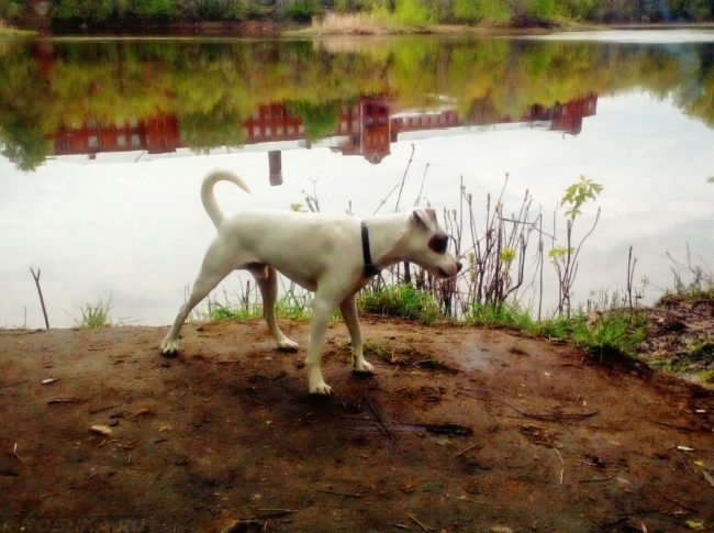 Гуляющая у водоём собака