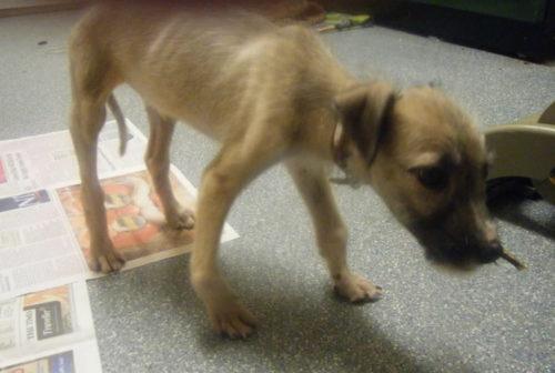 Рахит у собак: симптомы и признаки, лечение, что это такое, фото