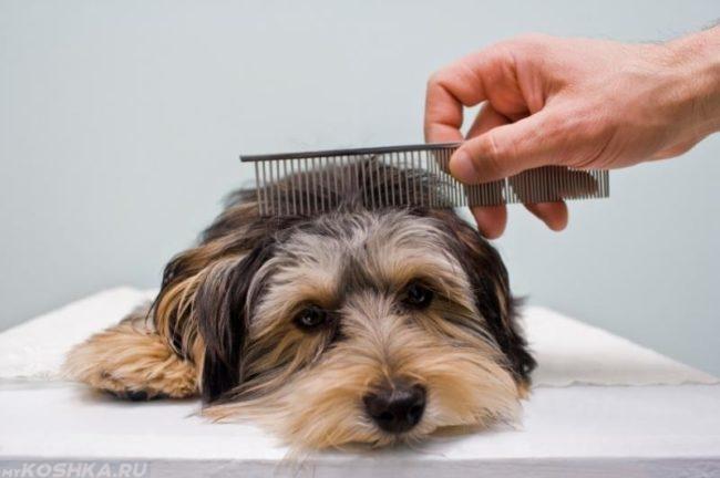 Расчёсывание собаки гребешком