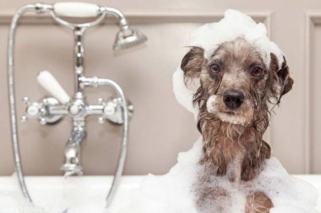 Собака в пене от шампуня