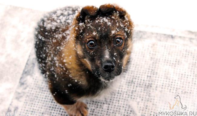 Щенок на улице в снегу